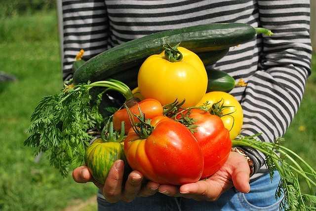 vegetables-742095